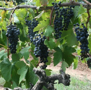 The old Triangle block Shiraz
